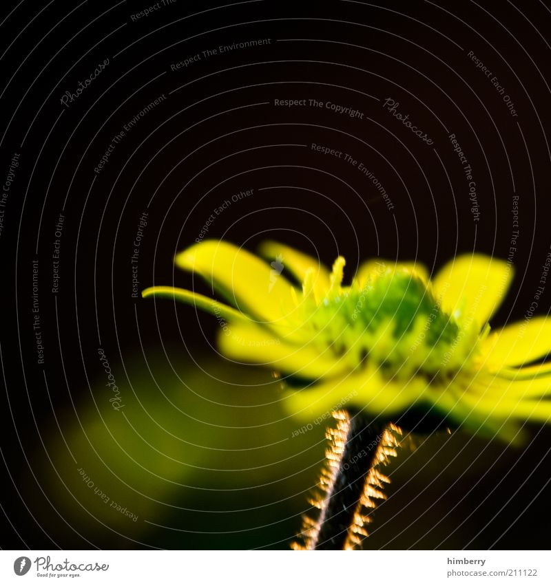Nature Flower Plant Summer Yellow Emotions Blossom Spring Moody Environment Mysterious Stalk Surrealism Blossom leave