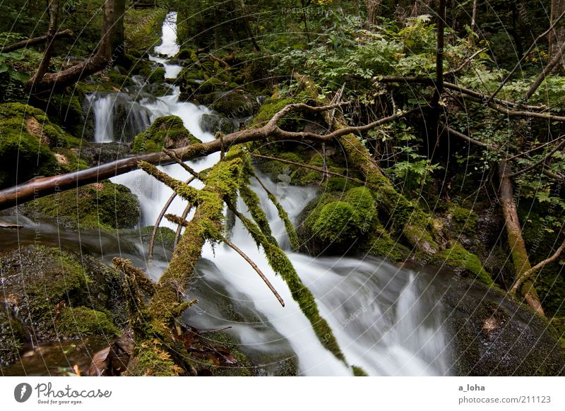 Nature Water Tree Green Plant Loneliness Forest Cold Mountain Movement Air Line Glittering Rock Esthetic Growth