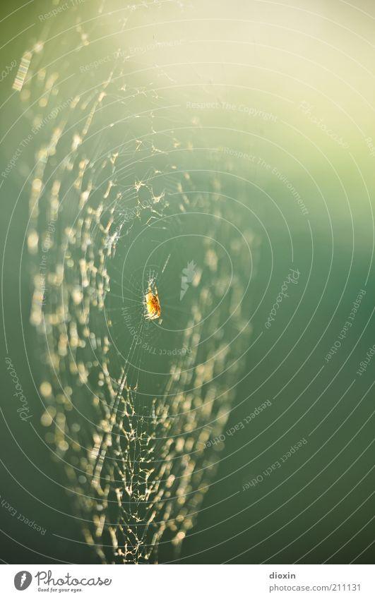 Nature Animal Environment Hang Spider Crawl Spider's web Net Blur