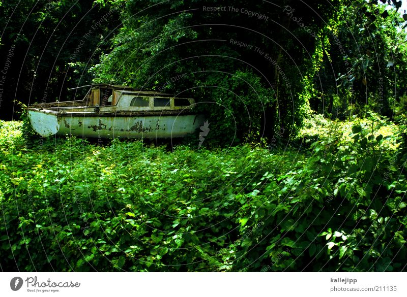 Nature Old Tree Plant Environment Change Mysterious Exceptional Derelict Decline Virgin forest Navigation Sailboat Yacht Ivy Foliage plant