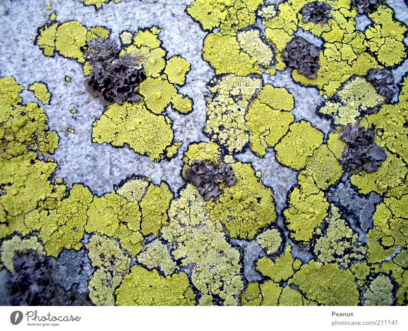 Nature Old Green Plant Yellow Colour Gray Stone Small Rock Arrangement Natural Exceptional Firm Moss Patch