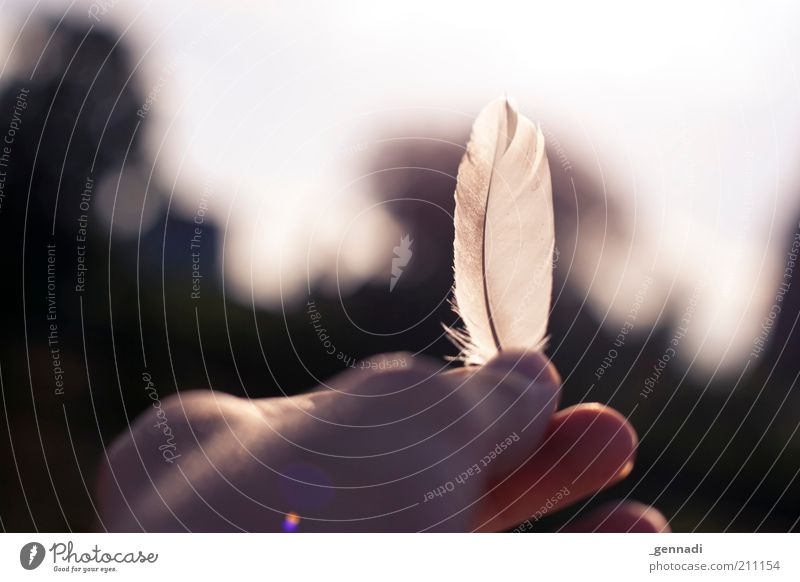 From the birds Hand Feather Looking Ease Easy Dazzle Fingers Exterior shot Deserted Copy Space top Day Silhouette Sunlight Back-light Shallow depth of field