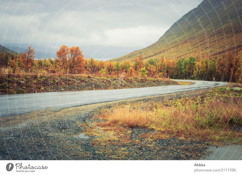 autumn colors, street, grey weather, foliage coloration Nature Landscape Autumn Bad weather Rain Forest Mountain Troms Street Lanes & trails Wet Gloomy