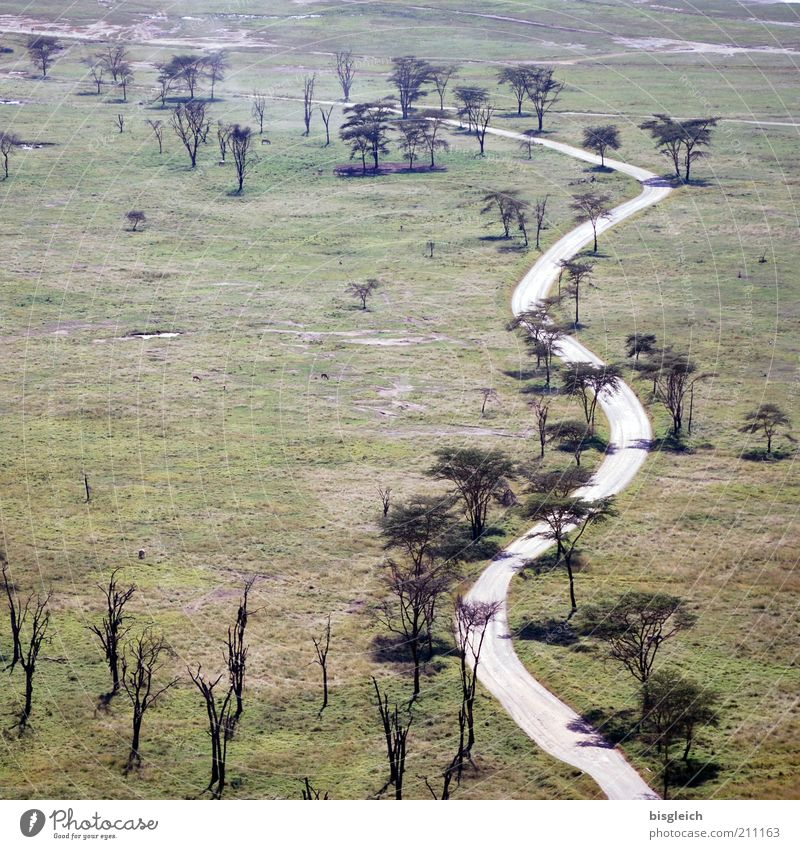 safari park Nature Landscape Tree Grass Steppe Street Lanes & trails Green Calm Kenya Lake Nakuru National Park Overview Africa Colour photo Subdued colour