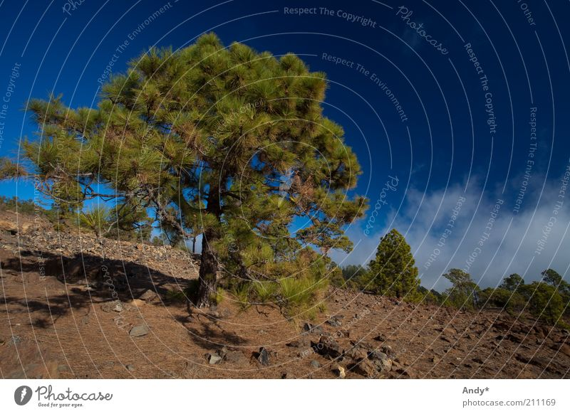 Nature Sky Tree Plant Summer Clouds Landscape Hill Spain Beautiful weather National Park Canaries Tenerife Teide
