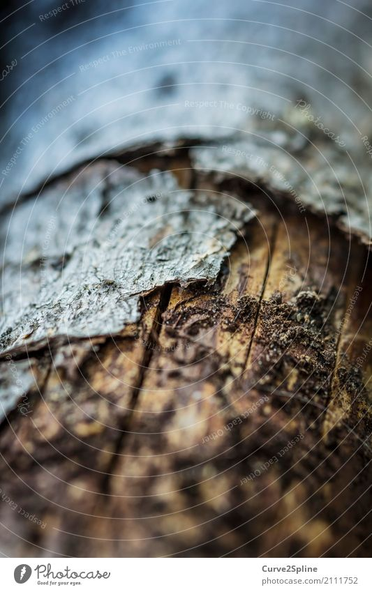 wood skin Nature Protection Wood Tree bark Skin Macro (Extreme close-up) Plant Tree trunk Crack & Rip & Tear Structures and shapes Flake off Defenseless Forest