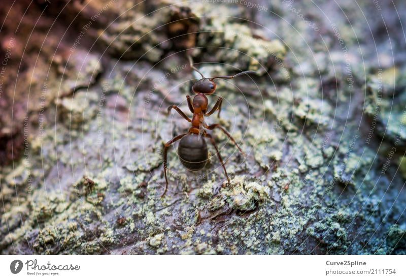 on Animal Strong Ant Insect Working man Diligent Nature Macro (Extreme close-up) Stand Wait Small Forest Woodground Forest animal Close-up Colour photo