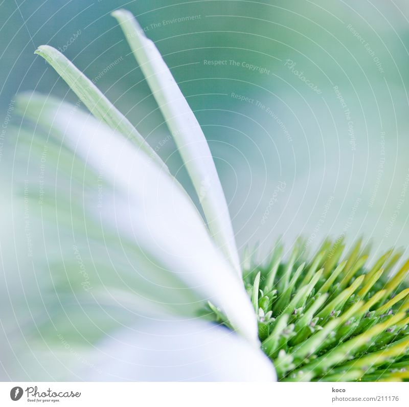 Beautiful White Green Plant Life Blossom Bright Esthetic Blossoming Fragrance Harmonious Section of image Blossom leave Time Macro (Extreme close-up)
