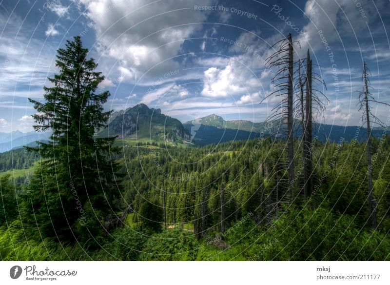 Hiking in Eastern Switzerland Sky Nature Tree Plant Summer Joy Clouds Forest Life Landscape Emotions Mountain Warmth Earth Moody Weather