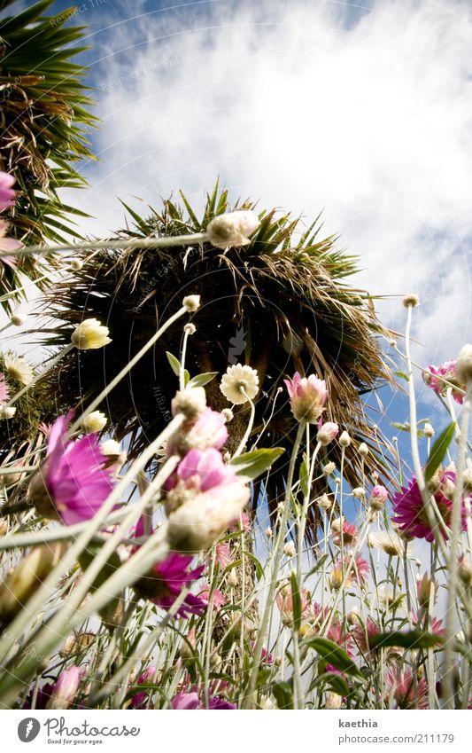 """<font color=""""#ffff00"""">-=let´s=- sync:ßÇÈâÈâ Environment Nature Sky Clouds Tree Blossom Exotic Pink Meadow Summer Sun Bushes Flower Flower field"""