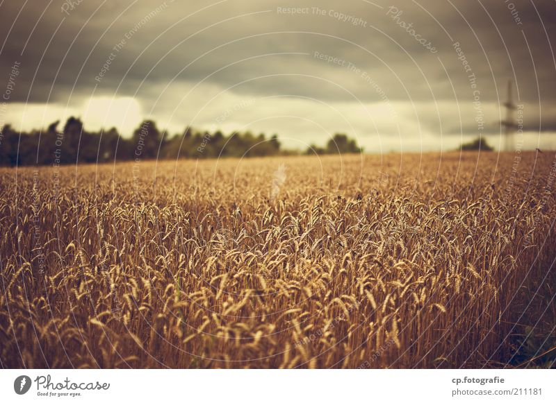 Who sows wind... Environment Nature Plant Clouds Storm clouds Summer Climate Climate change Bad weather Rain Thunder and lightning Agricultural crop Field
