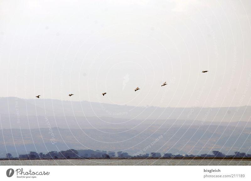 Nature Lake Landscape Air Flying Africa Longing Wild animal Row Bird Animal Safari Floating Flock Kenya Flock of birds