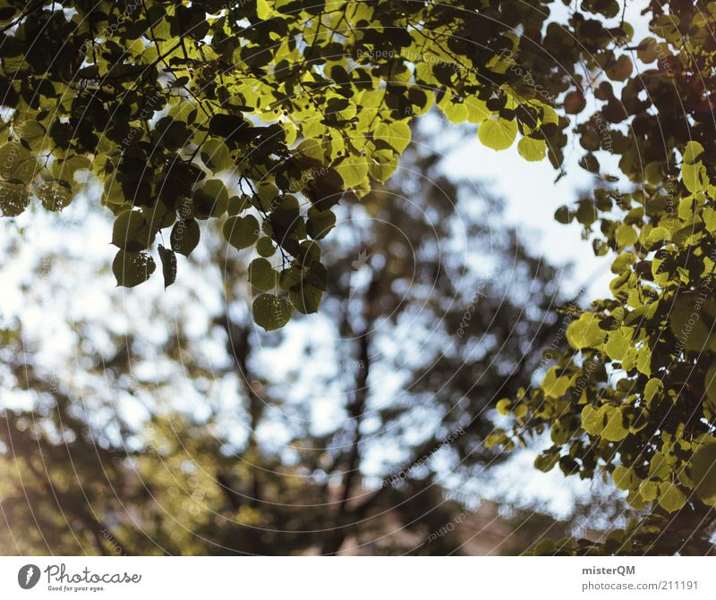 Nature Tree Green Plant Summer Calm Leaf Forest Park Wind Environment Esthetic Natural Treetop Ecological Twig