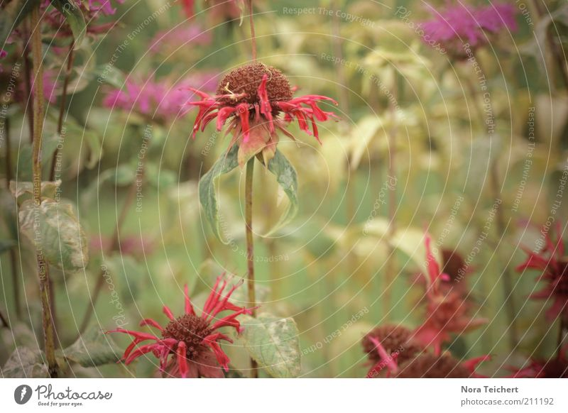 Nature Old Plant Summer Flower Environment Landscape Emotions Blossom Sadness Dream Time Weather Fear Natural Esthetic