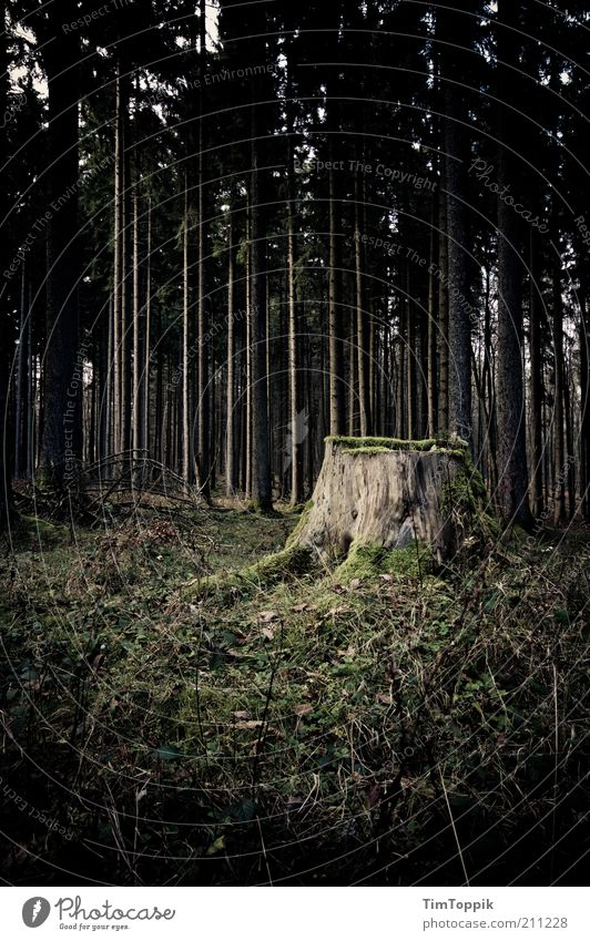 Sagaland Forest Green Black Woodground Clearing Forest death Tree trunk Tree felling Tree stump Mystic Mysterious Dark Eerie Fear Loneliness Soul Sadness