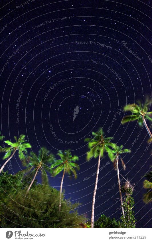 starry sky Nature Plant Air Sky Stars Summer Bushes Exotic Island Oasis Deserted Far-off places Infinity Clean Blue Green Black Hope Belief Wanderlust