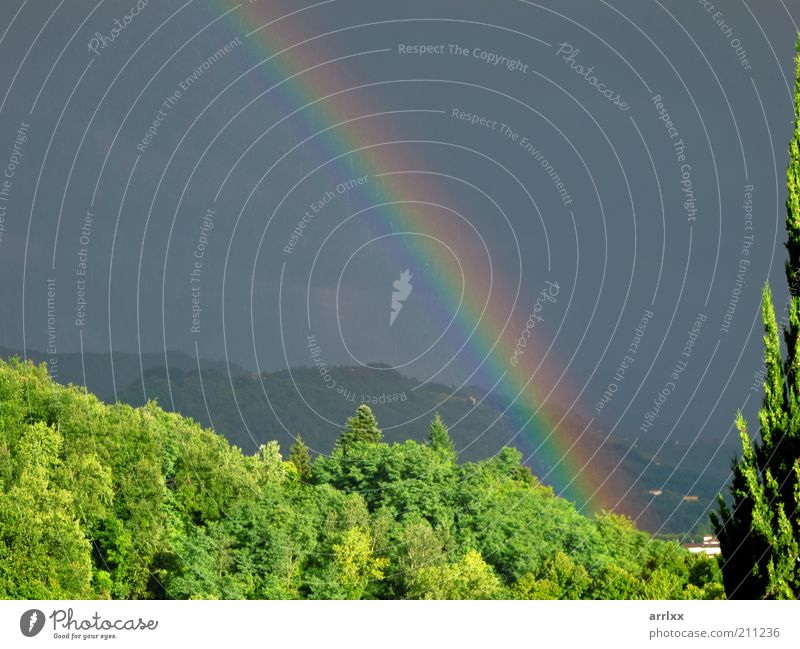 intense rainbow above forest Sun Environment Nature Landscape Drops of water Sky Clouds Storm clouds Summer Weather Wind Gale Rain Tree Forest Hill Mountain