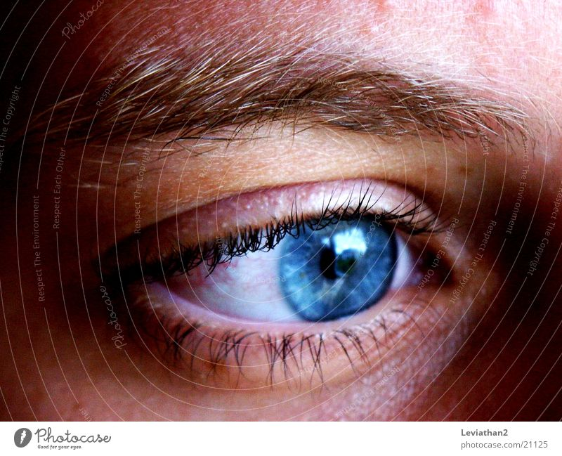 Human being Blue Eyes Colour Concentrate Rainbow Eyelash Eyebrow Pupil Vision Gaze Eye colour
