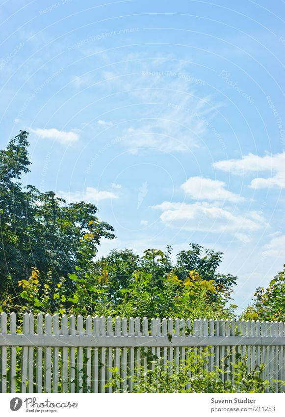 Tree Blue Clouds Garden Bright Bushes Fence Beautiful weather Blue sky Sky blue Barrier Boundary Garden fence Wooden fence Baby blue Boundary line