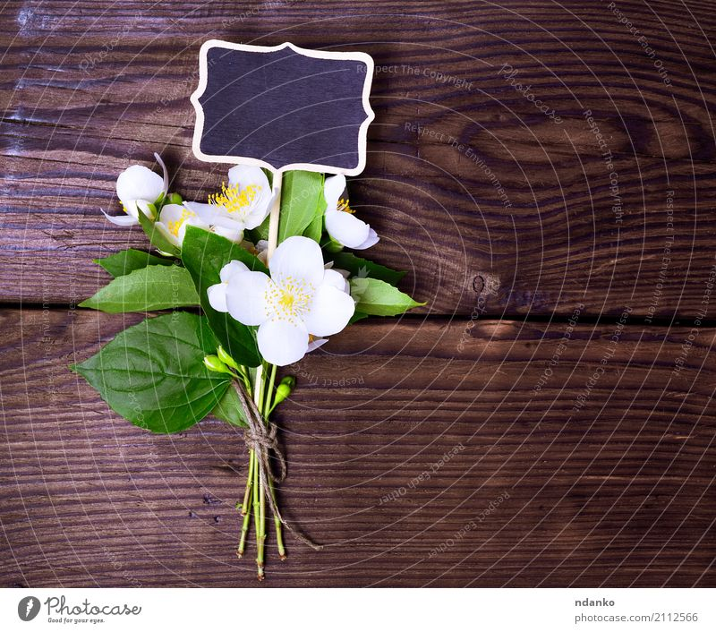 bouquet of blossoming jasmine Beautiful Summer Garden Nature Plant Leaf Blossom Bouquet Wood Blossoming Fresh Bright Natural Above Yellow Green White Colour