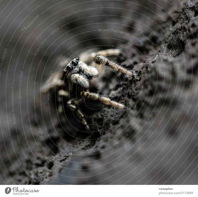 Animal Exceptional Rock Jump Wait Speed Observe Threat Curiosity Brave Hunting Disgust Spider