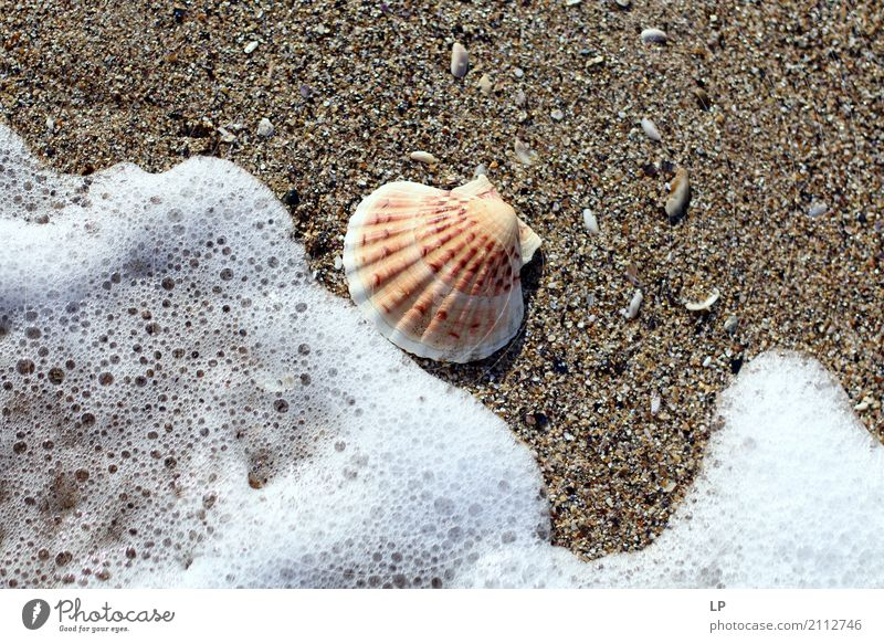 seashell and wave Vacation & Travel Summer Water Sun Ocean Relaxation Calm Joy Beach Life Lifestyle Emotions Tourism Sand Design Living or residing