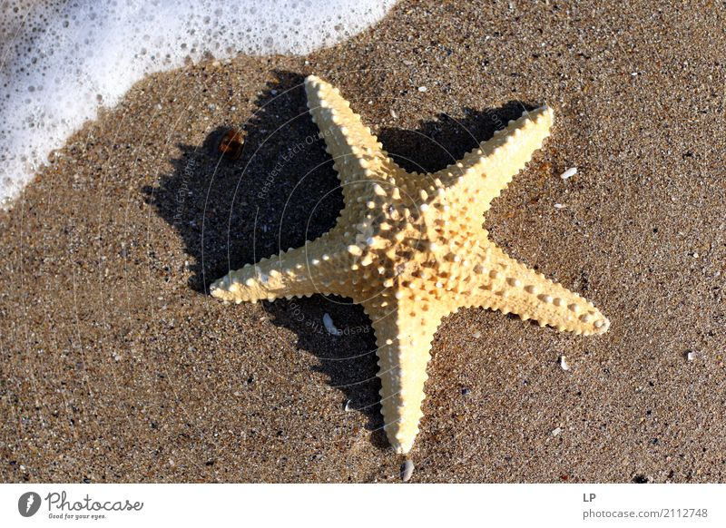 starfish and seafoam Vacation & Travel Ocean Relaxation Calm Joy Far-off places Beach Life Lifestyle Emotions Background picture Style Freedom Tourism Design