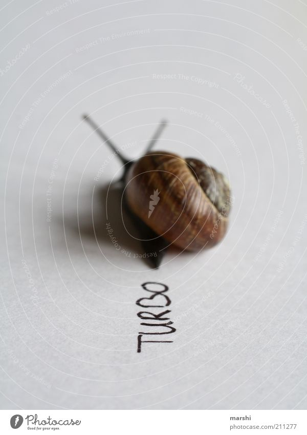 Animal Small Speed Characters Symbols and metaphors Snail Feeler Converse Slowly Slimy Snail shell Meaning