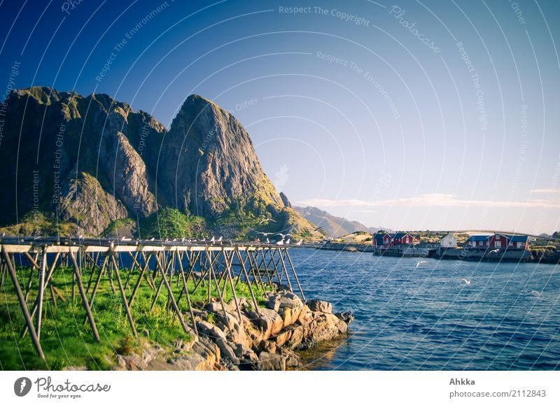 Dry fish scaffold Vacation & Travel Tourism Summer vacation Sun Environment Nature Landscape Beautiful weather Mountain Coast Fjord Ocean Reine Lofotes