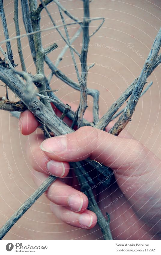 Hand Plant Wait Skin Fingers Branch Natural Exceptional Pain To hold on Twig Thorn Thorny Faded Human being Naked flesh