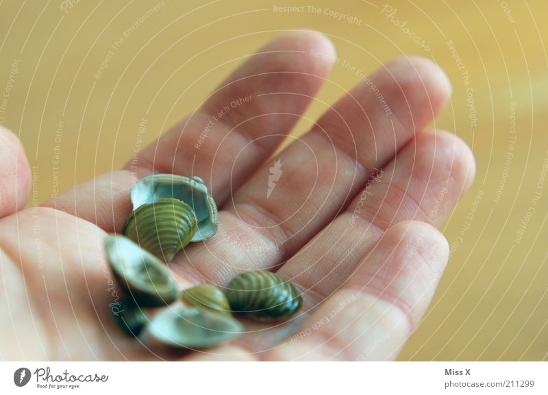 Animal Small Wet To hold on Collection Mussel Palm of the hand Mussel shell