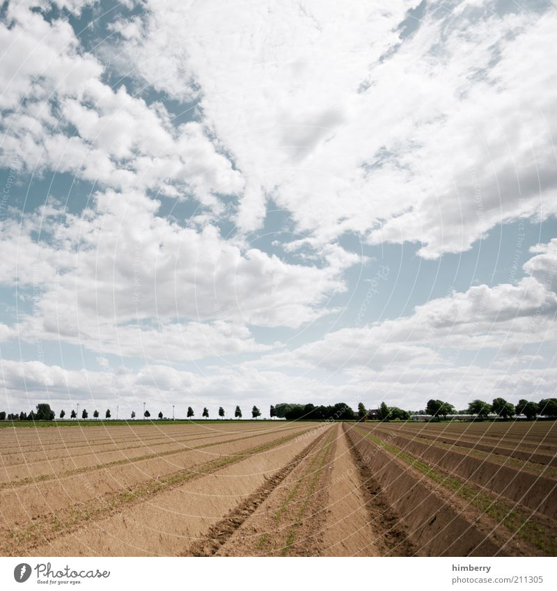 Sky Nature Plant Summer Clouds Far-off places Environment Landscape Air Earth Weather Field Climate Harvest Agriculture Expectation