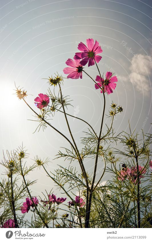 Sky Nature Plant Summer Green Flower Warmth Life Environment Natural Pink Together Bright Illuminate Elegant Growth
