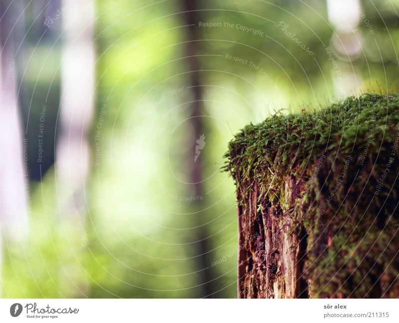 Nature Old Tree Green Summer Forest Wood Brown Environment Wet Growth Soft Change Transience Natural Derelict