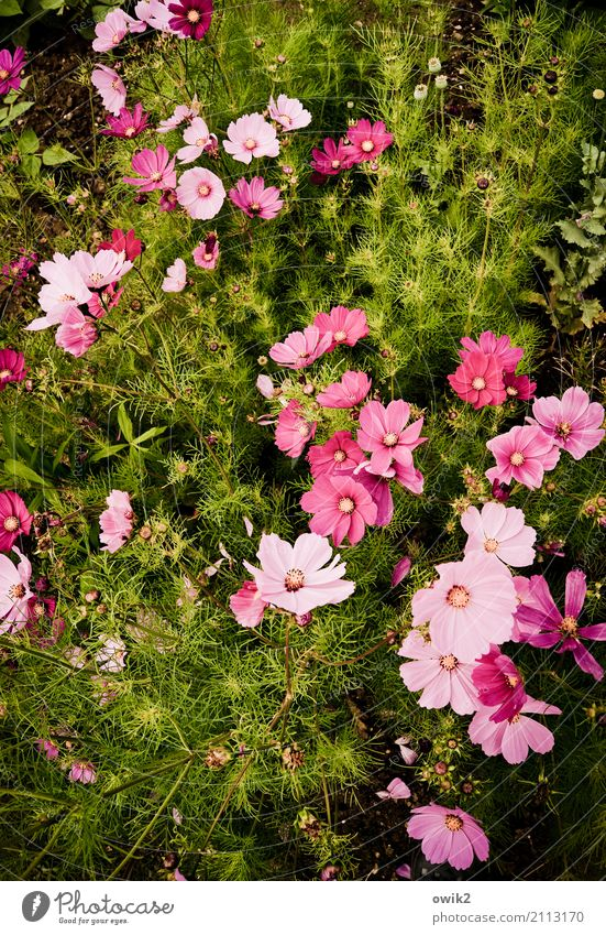 Nature Plant Colour Green Flower Life Environment Blossom Movement Natural Pink Together Growth Power Idyll Authentic