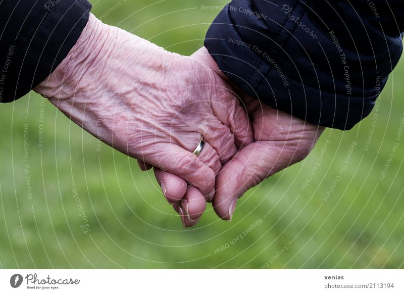 two seniors hold hands in front of a green background Female senior Woman Male senior Man Grandparents Senior citizen Partner Skin Hand 2 Human being