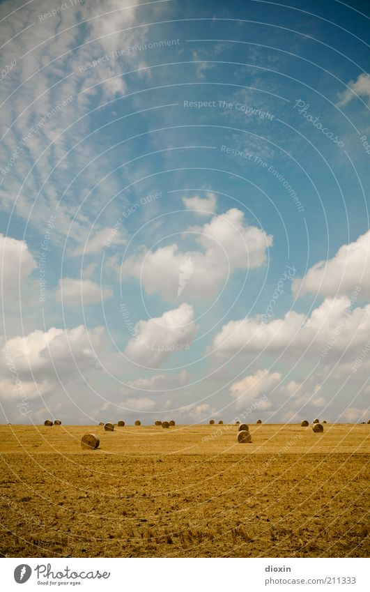 wide field Agriculture Environment Nature Landscape Earth Sky Clouds Summer Agricultural crop Grain field Grain harvest Harvest Hay Hay bale Hay roll
