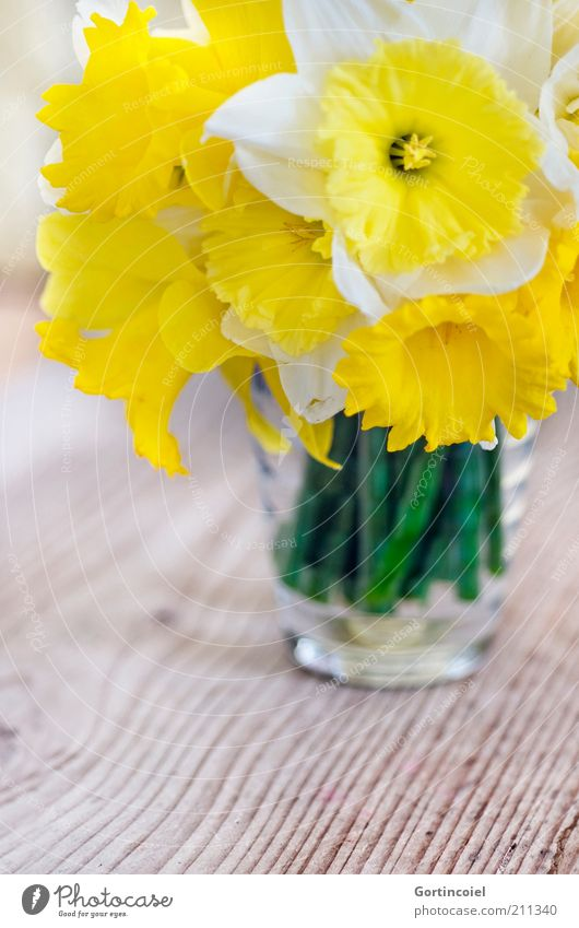 Narcissus Flower Blossom Beautiful Wild daffodil Spring Spring flower Bouquet Vase Wooden table Flowering plant Yellow Decoration Colour photo Interior shot