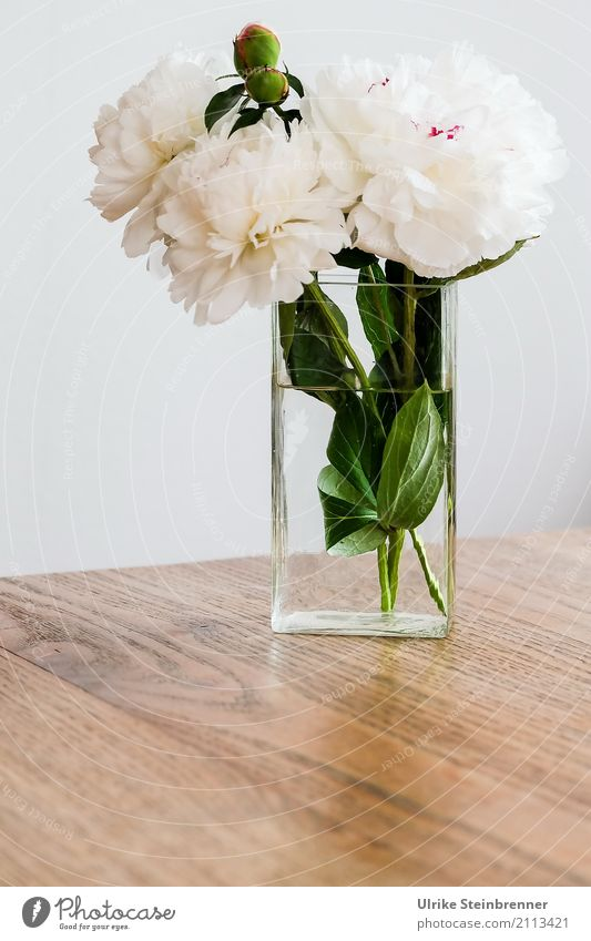 peonies Flat (apartment) Table Living room Plant Flower Leaf Blossom Peony Bouquet Vase Glass Fragrance Illuminate Stand Esthetic Fresh Natural Beautiful Soft