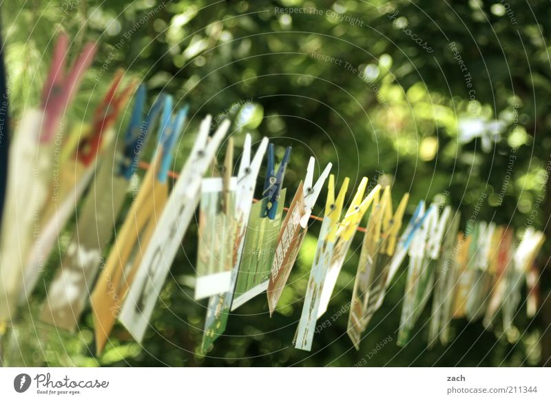 cards Garden Feasts & Celebrations Exhibition Stationery Collection Hang Green Orderliness Design Creativity Card Clothes peg Clothesline Row Exterior shot