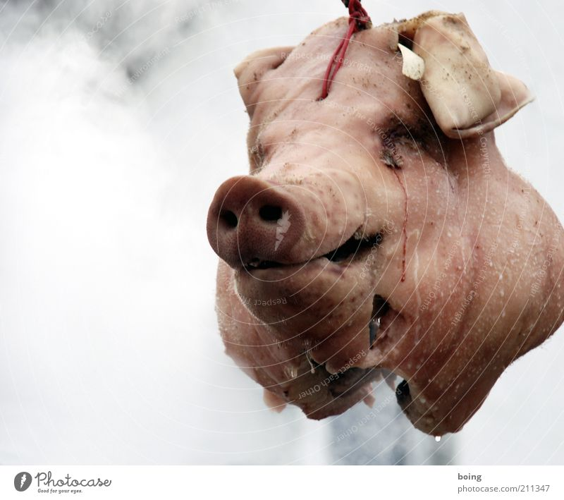 Death Head Food Swine Exceptional Craft (trade) Animal face Creepy Hang Meat Disgust Tradition Nutrition Hideous Sausage