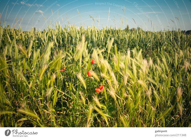 Nature Sky Plant Summer Clouds Blossom Grass Lanes & trails Landscape Field Healthy Environment Happiness Growth Bushes Joie de vivre (Vitality)