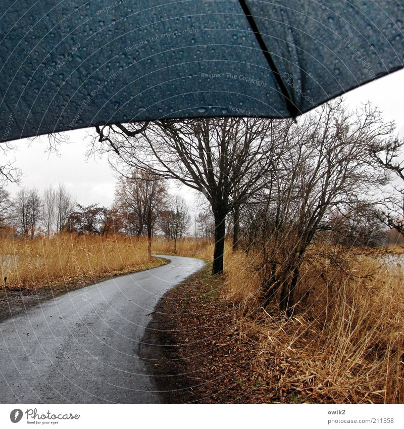 Wind and weather Environment Nature Landscape Water Drops of water Sky Horizon Winter Climate Weather Bad weather Rain Plant Tree Grass Bushes Wild plant