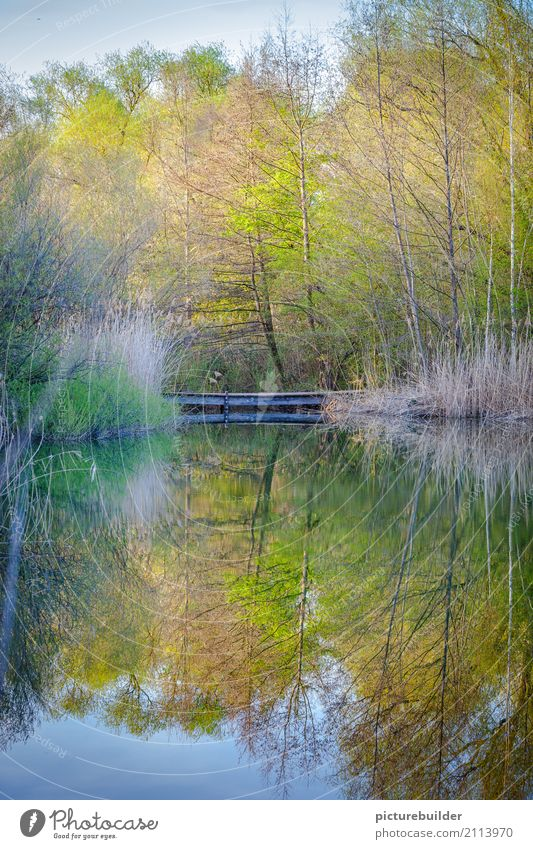 At the lake Nature Plant Water Sky Spring Beautiful weather Tree Bushes Forest Lakeside Wood Green Moody Calm Contentment Relaxation Colour photo Exterior shot