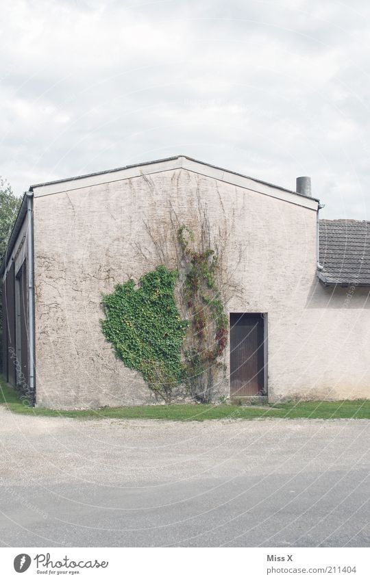 dreariness Plant Ivy House (Residential Structure) Building Wall (barrier) Wall (building) Door Growth Gloomy Farm Courtyard Barn Colour photo Subdued colour