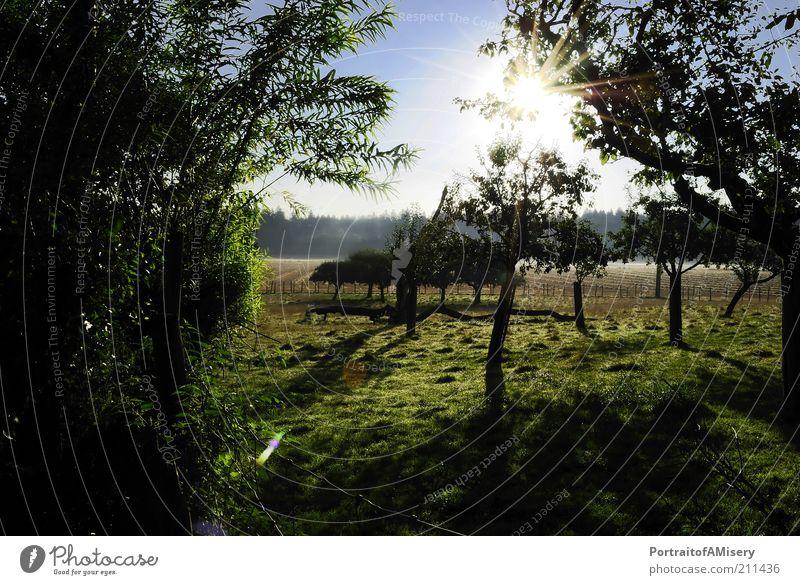 Nature Tree Sun Calm Warmth Landscape Field Idyll Beautiful weather Plantation