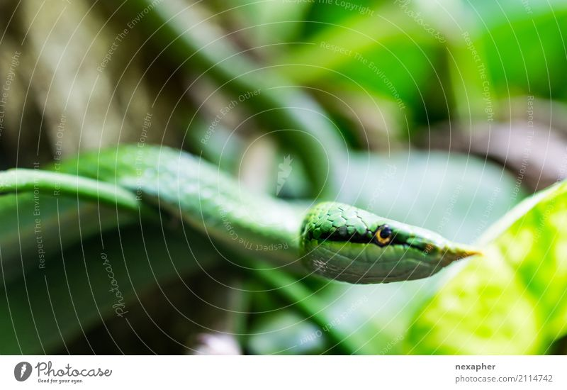 Colour Beautiful Green Eroticism Animal Cold Emotions Natural Elegant Esthetic Adventure Dangerous Threat Touch Exotic Aggression