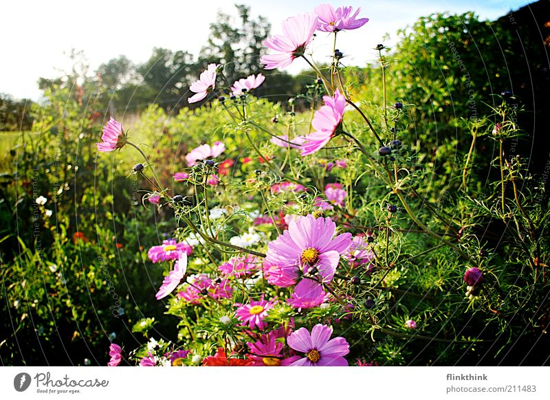 Nature Flower Green Plant Summer Relaxation Meadow Blossom Grass Spring Garden Landscape Environment Bushes Violet Blossoming