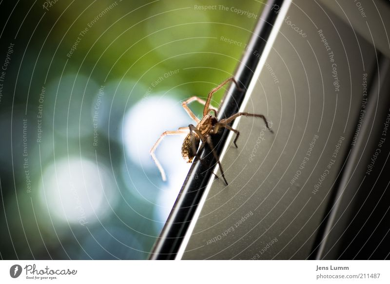 itsy bitsy spider Animal Spider 1 Yellow Disgust Window Blur Slice Colour photo Copy Space left Day Shallow depth of field Window frame Upward Crawl Spider legs
