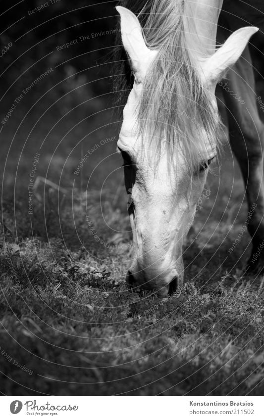 Beautiful Summer Eyes Animal Relaxation Meadow Spring Head Free Horse Ear Pasture To feed Mane Love of animals Nostrils